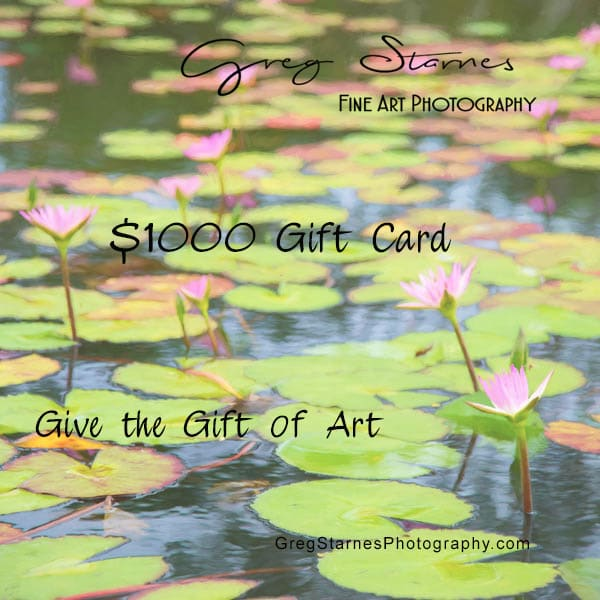 $1000 Gift Card | Greg Starnes Phtography