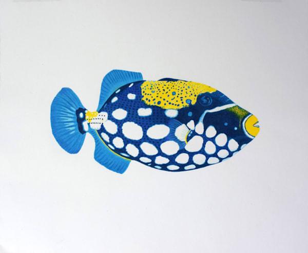 Trigger Fish No 1 Open Edition Print Art | juliesiracusa