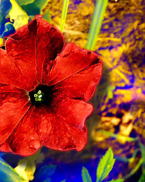 Flower 36 Art | Cincy Artwork