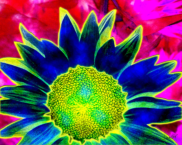 Sunflower 5 Art | Cincy Artwork