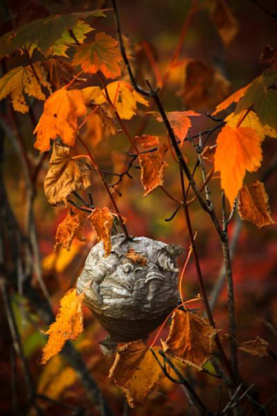 Fall colors, hive