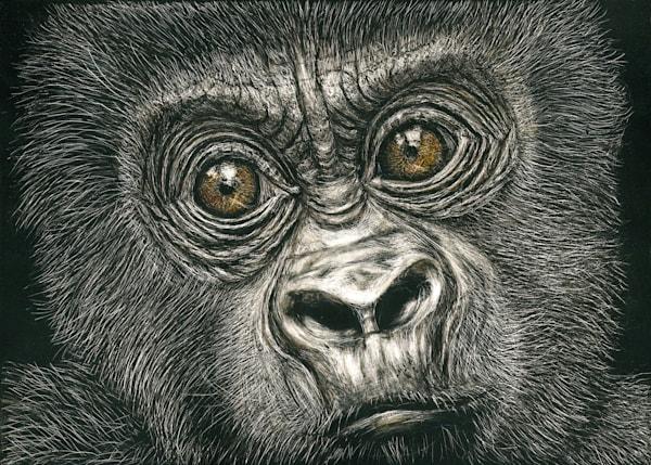 Mountain Gorilla - Kathy Huberland