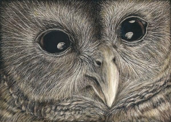 Owl - Kathy Huberland