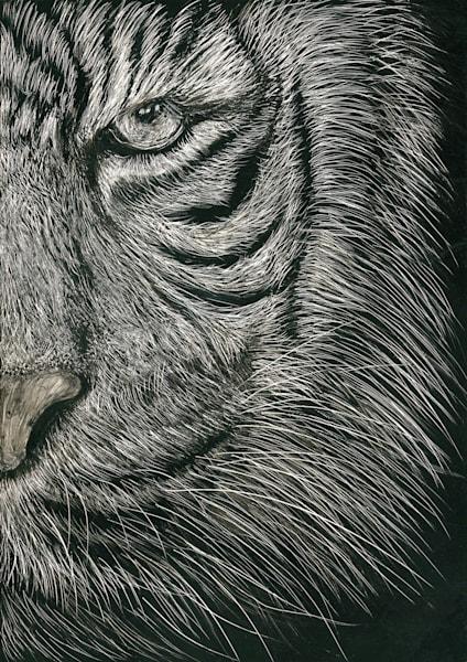 Bengal Tiger - Kathy Huberland