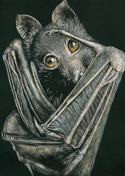 Black Flying Fox - Kathy Huberland