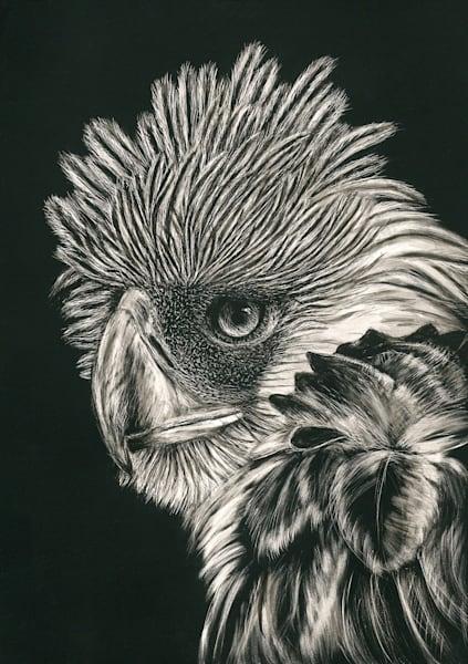 Philippine Eagle - Kathy Huberland