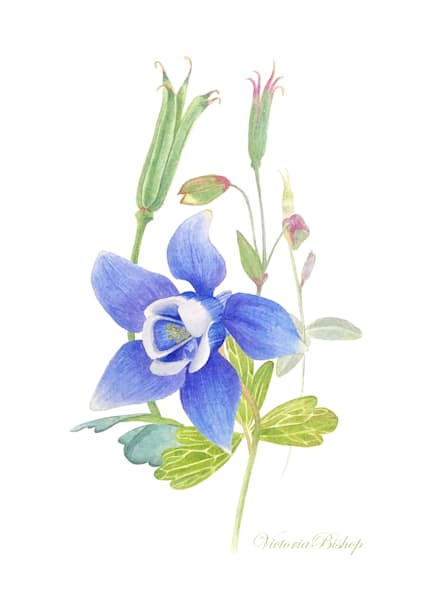 Columbine Art | victoriabishop.art