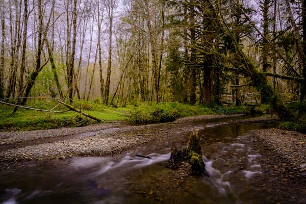 Creek in Quinault River Valley, Washington, 2020