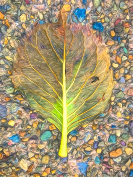 Leaf Expressions|Fine Art Photography for sale by ToddBreitlingArt.com