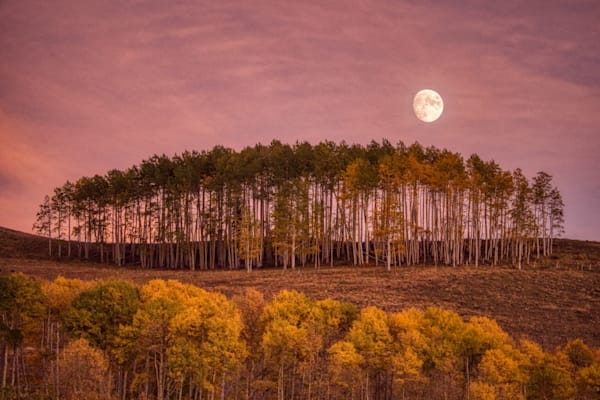 The moon rising over a group of aspen trees as the sun was setting. Near Telluride, Colorado.