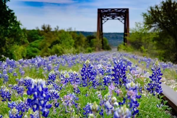 Texas Bluebonnet Railroad