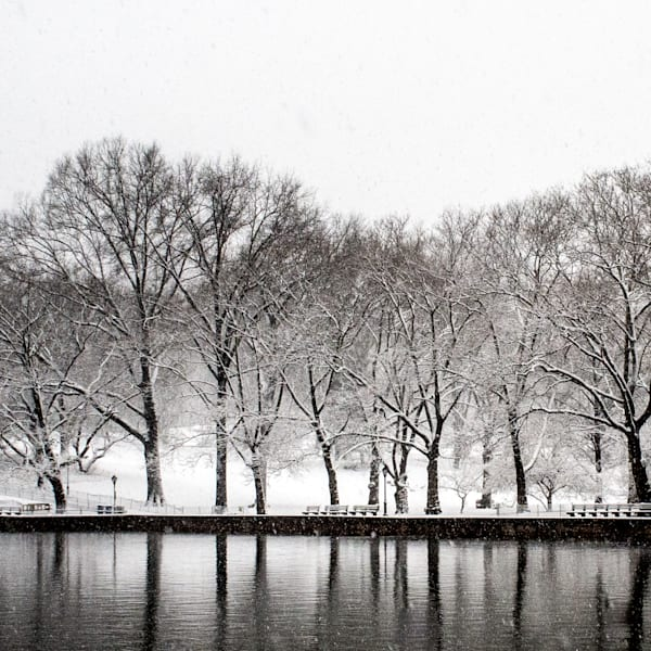 Trees, Conservatory Water Photography Art   Ben Asen Photography