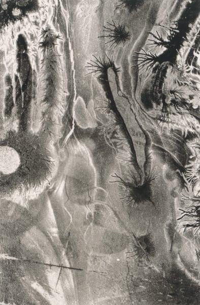 Electrostatic Monotype 19-EM19 by Kim Gatesman