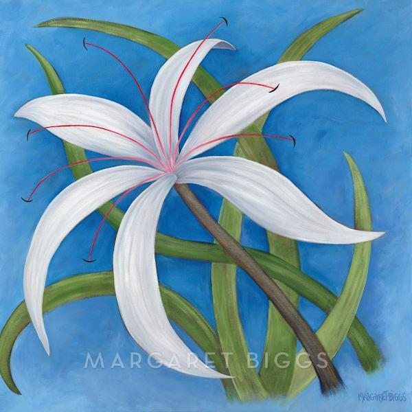 Spider Lily  Art | Margaret Biggs Fine Art