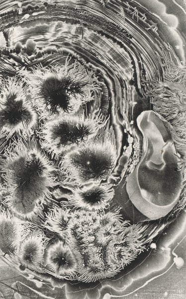 Electrostatic Monotype 19 Em27 Art | Kim Gatesman Studios