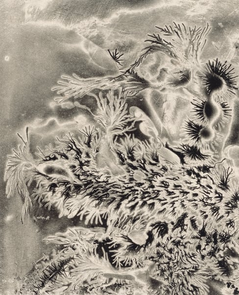 Electrostatic Monotype 19-EM21 by Kim Gatesman