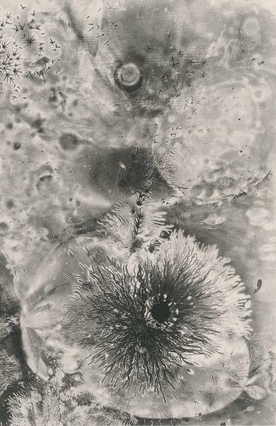 Electrostatic Monotype 19-EM25 by Kim Gatesman
