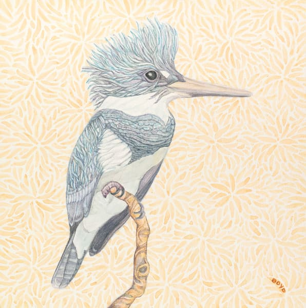 Belted Kingfisher watercolor by Judy Boyd