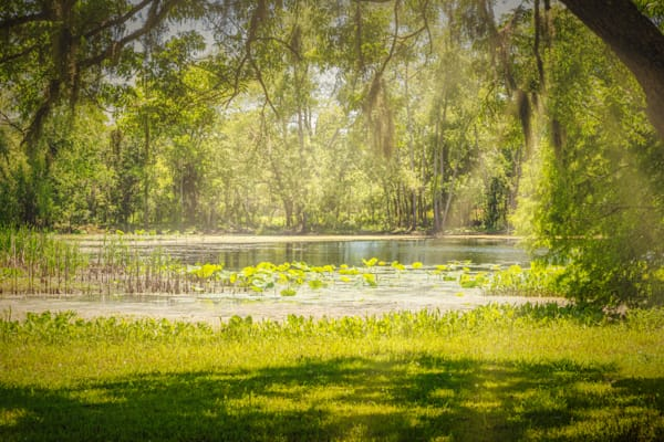 Texas Pond On A Sunny Afternoon Photography Art | Grace Fine Art Photography by Beth Sheridan