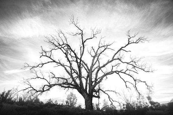 Oak Of Hope Photography Art | Sydney Croasmun Photography