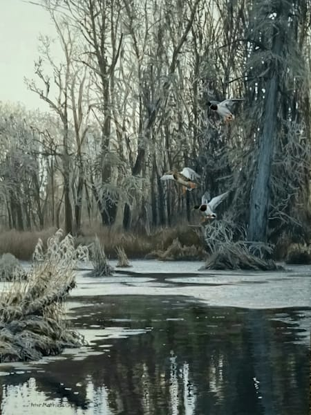 Waterfowl and Upland Birds