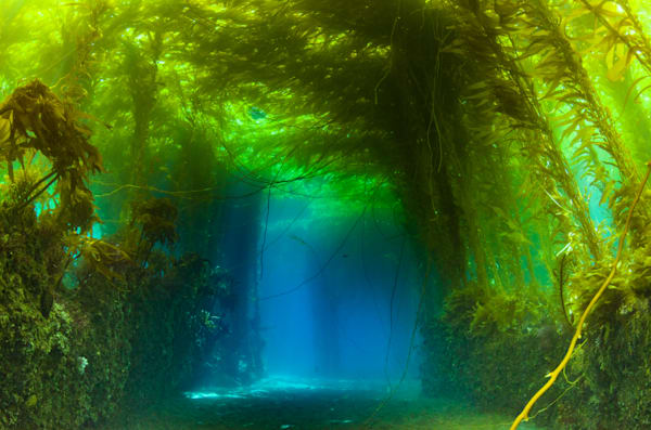 Southern California Underwater