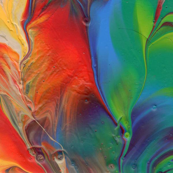 Parrot Feather Art | KD Neeley, Artist