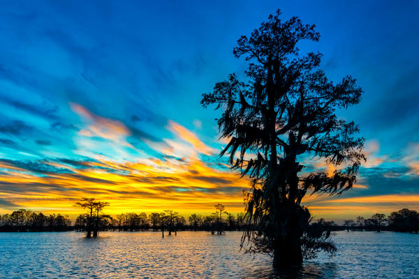 New Year's Promise - Louisiana swamp photography prints