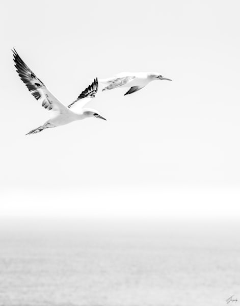 Flight Art | TG Photo