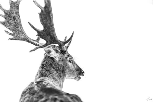Winter Elegance Art | TG Photo