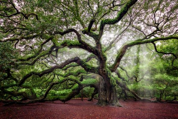 The Angel Oak | Shop Photography by Rick Berk