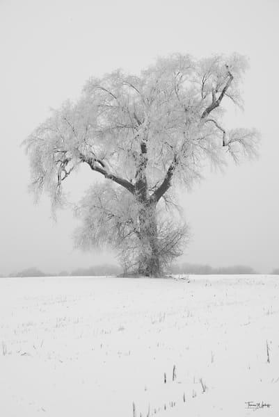 Lone Tree, Danada, 2021