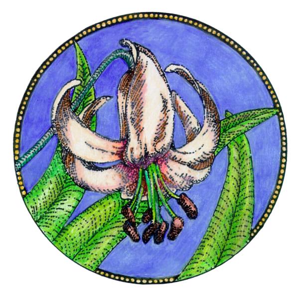 Lily circle