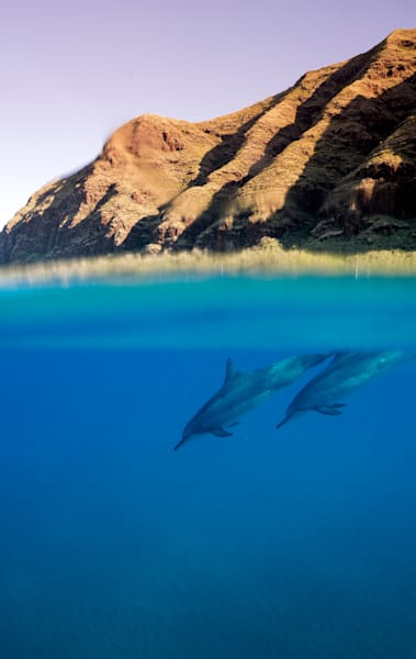 The Dolphin Dive Art | Modus Photography