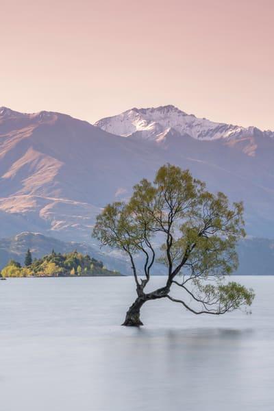 That Wanaka Tree Art | Modus Photography