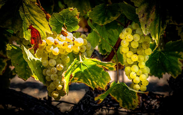White Wine In Waiting Photography Art | Lance Haynes