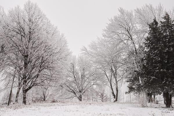 Winter Tableau, 2021