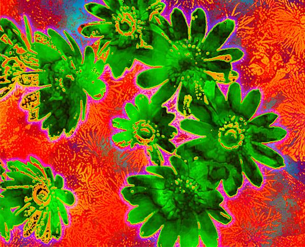 Adonis Vernalis Art | Cincy Artwork