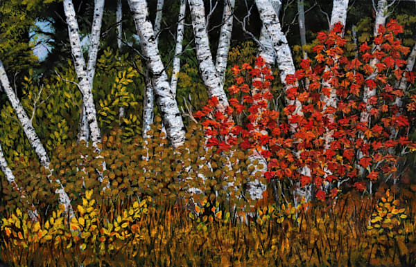 Fall Birch Trees Art   Skip Marsh Art