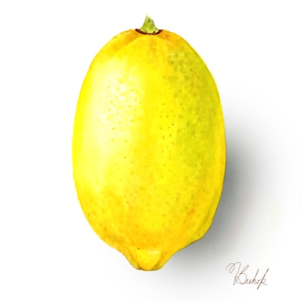 Lemon Art | victoriabishop.art