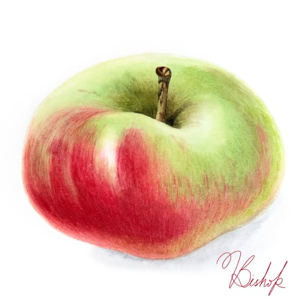 Apple Art | victoriabishop.art