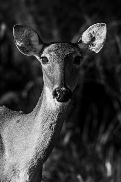 Deershot Photography Art | kramkranphoto