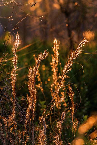 Lake Kissimmee Highlights Photography Art | kramkranphoto