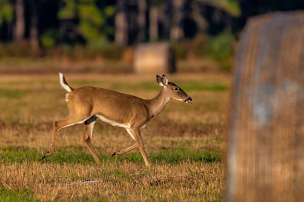 Running Through The Field Photography Art | kramkranphoto
