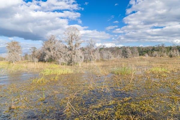 Lake Hatchineha Sights Photography Art | kramkranphoto