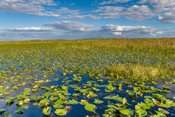 Airboat Access Granted Photography Art | kramkranphoto
