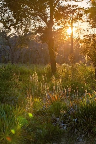 Central Florida Sunset Photography Art   kramkranphoto