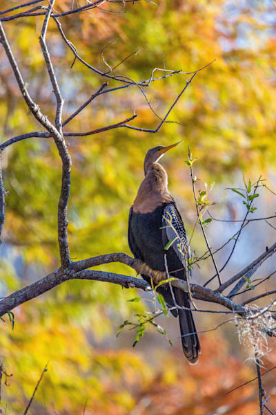 Natural Florida Photography Art   kramkranphoto