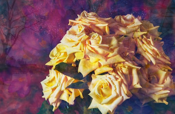 Roses In Spring Photography Art | Elizabeth Stanton Photography