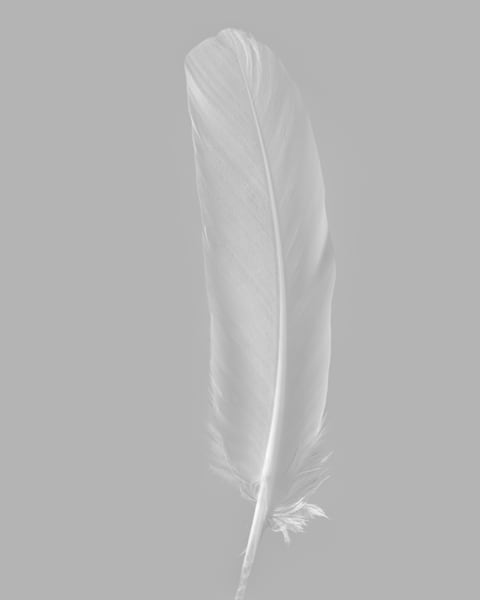 White Feather 2003 Photography Art | Rick Gardner Photography